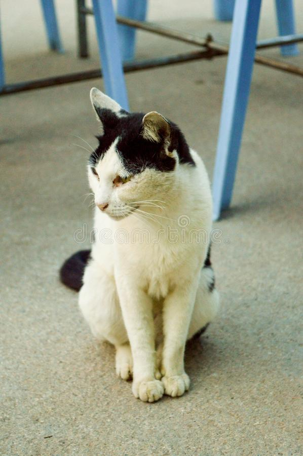 在水泥地板上的逗人喜爱的白色猫 免版税库存图片