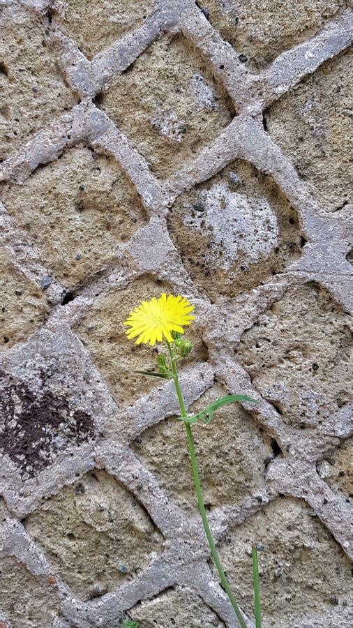 在水泥的花 库存图片