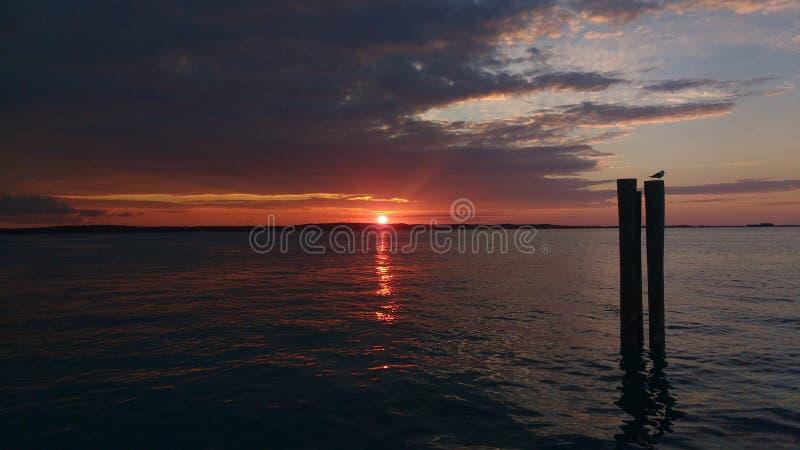 在水的日落从港口海岛,巴哈马 一只鸟的剪影在树干的 免版税库存照片