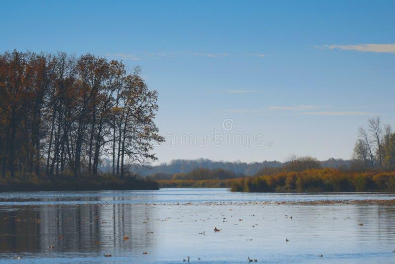在水的秋叶浮游物 湖或河用安静的水在秋天季节 图库摄影