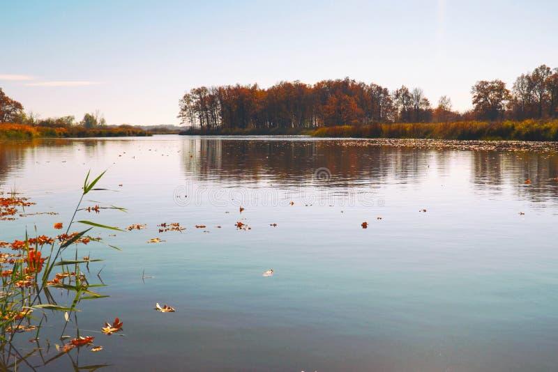 在水的秋叶浮游物 湖或河用安静的水在秋天季节 库存图片