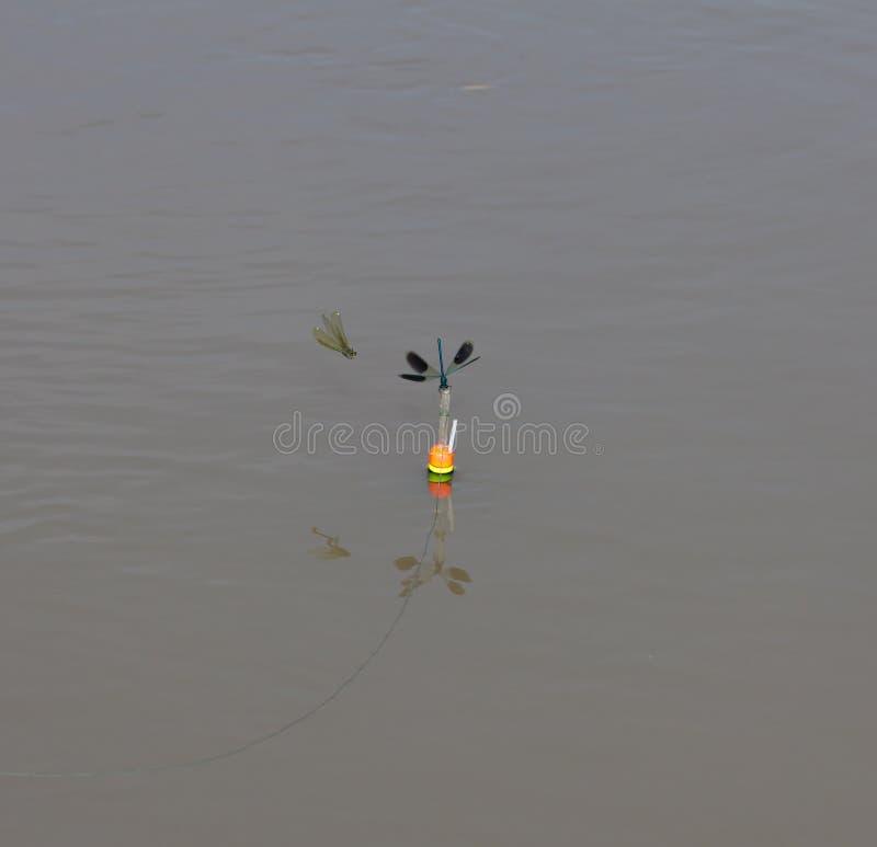 在水的蜻蜓本质上 库存图片