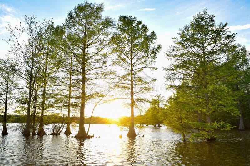 在水的被曝光过度的日落与在前景的树 免版税库存照片