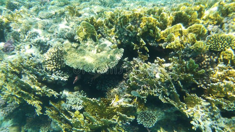在水礁石下 库存照片