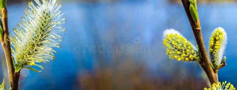 在水背景的花 图库摄影