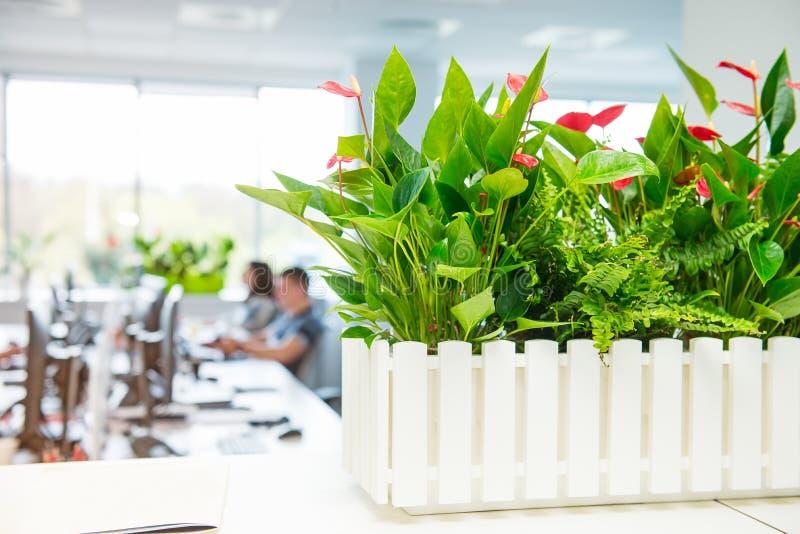 在水芋属的选择聚焦在罐开花有开放工作区办公室, comput轻的内部被弄脏的背景有书桌的 免版税库存照片