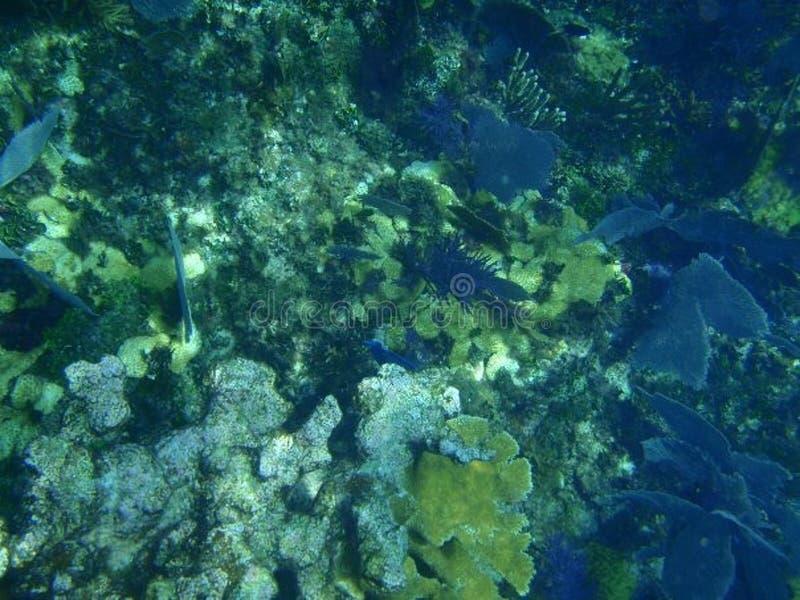 在水面下佩戴水肺的潜水在珊瑚礁附近 库存图片