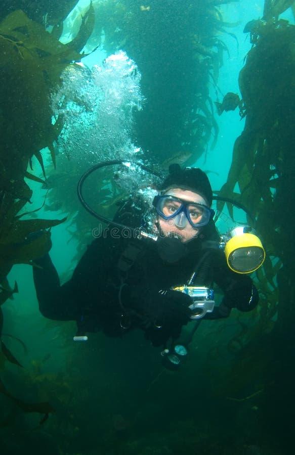 在水面下catalina摄影师垂直 免版税库存照片