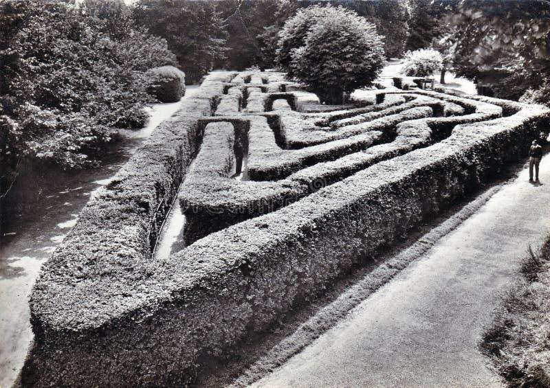 在汉普敦宫,米德塞科斯的迷宫 葡萄酒黑白明信片 库存照片