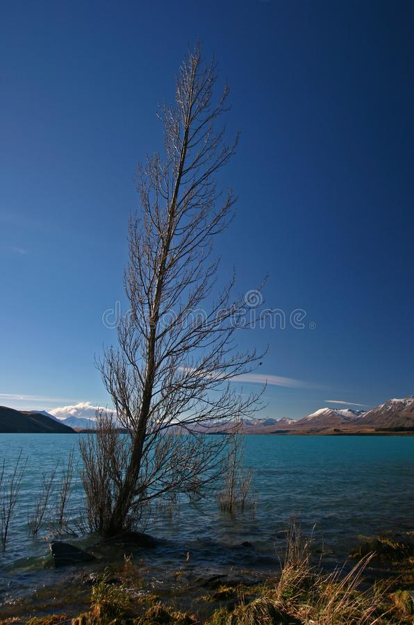 在江边的精采孤立不生叶的柏树有与雪的遥远的山的在秋天 免版税库存图片