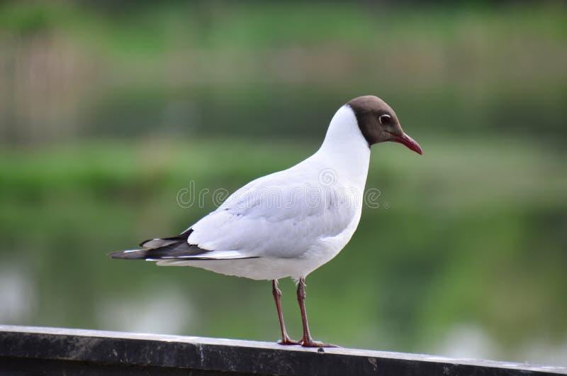 在江边的鸟 免版税库存图片