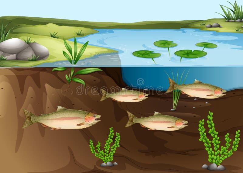 在池塘下的生态系 向量例证