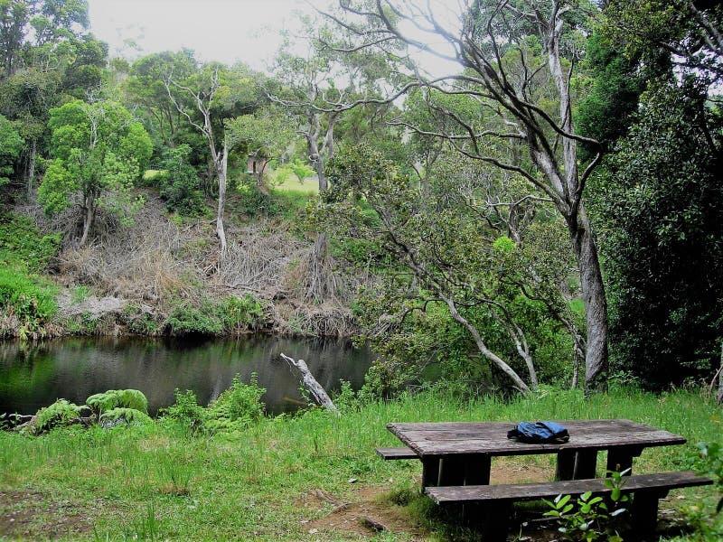 在池塘和当地森林附近的野餐长凳Waialeale的在Kokee,考艾岛,夏威夷 免版税库存图片