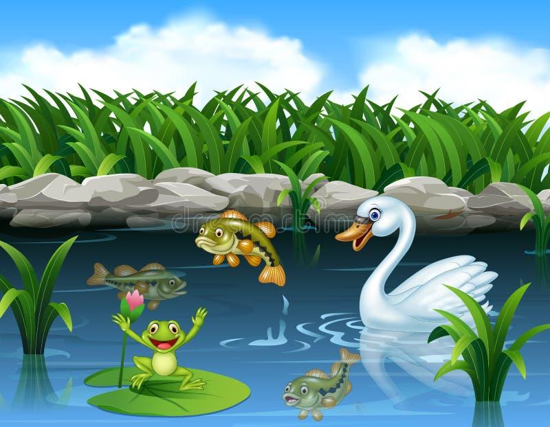 在池塘和青蛙的逗人喜爱的天鹅游泳 皇族释放例证