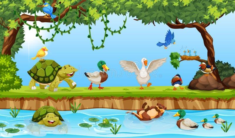 在池塘场面的动物 皇族释放例证