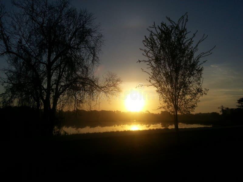 在池塘的太阳被构筑在两棵树之间 免版税库存图片