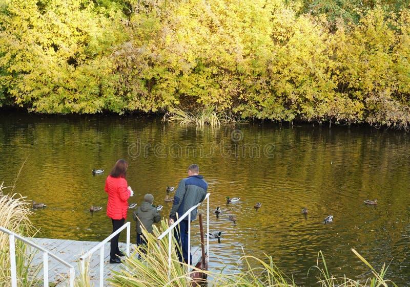 在池塘的家庭在一晴朗的秋天天喂养鸭子 库存照片
