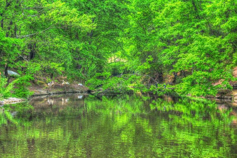 在池塘的绿色植物 库存照片