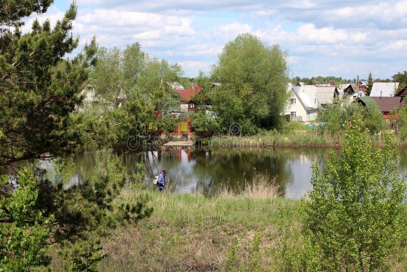 在池塘附近的树丛林和灌木在一个晴朗的夏日 库存照片