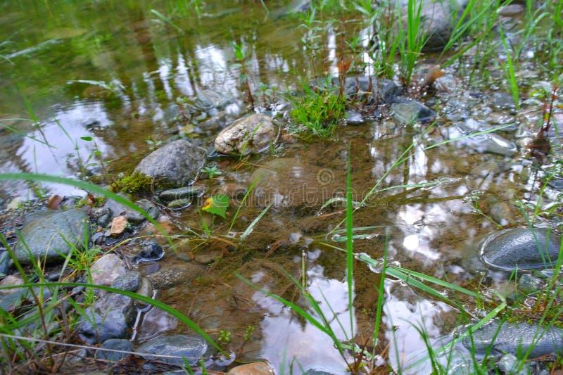 在池塘附近的石岸 生长在沼泽的绿色植物 长得太大的池塘 ?? 免版税库存照片