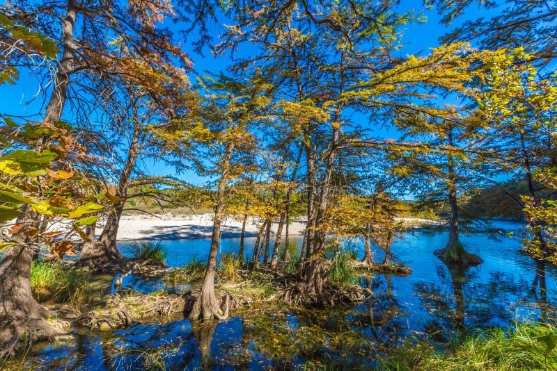 在池柏树的秋叶在透明的Frio河 免版税库存照片