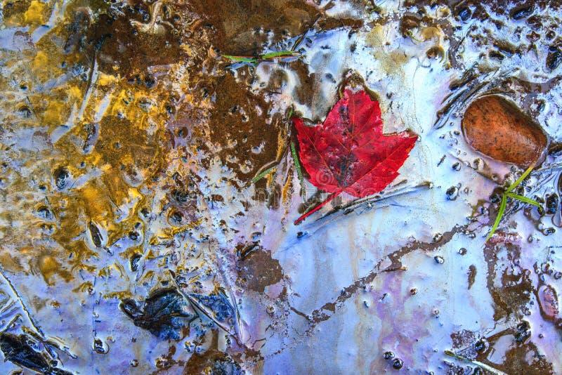 在汽油的红槭叶子沾染了海滩 图库摄影
