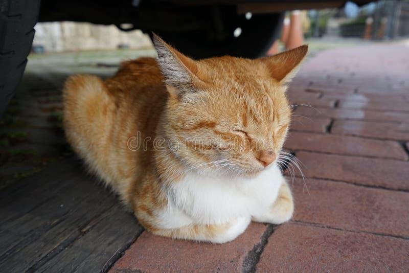 在汽车下的睡觉猫 免版税库存照片