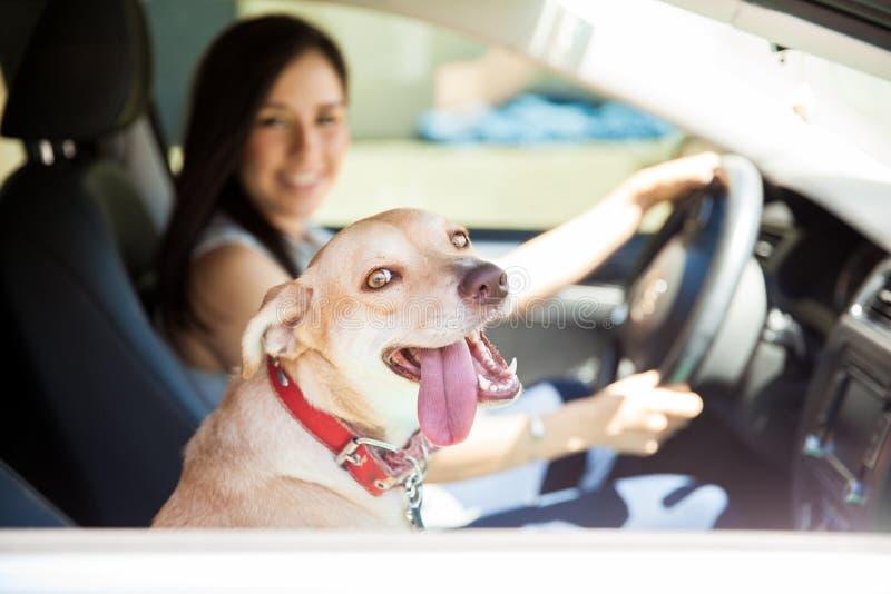 在汽车乘驾的美丽的狗 库存照片