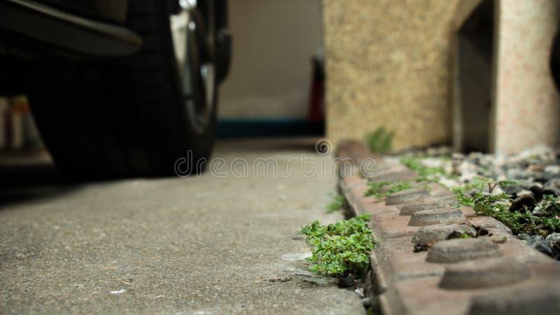 在汽车停车处的杂草 免版税库存图片