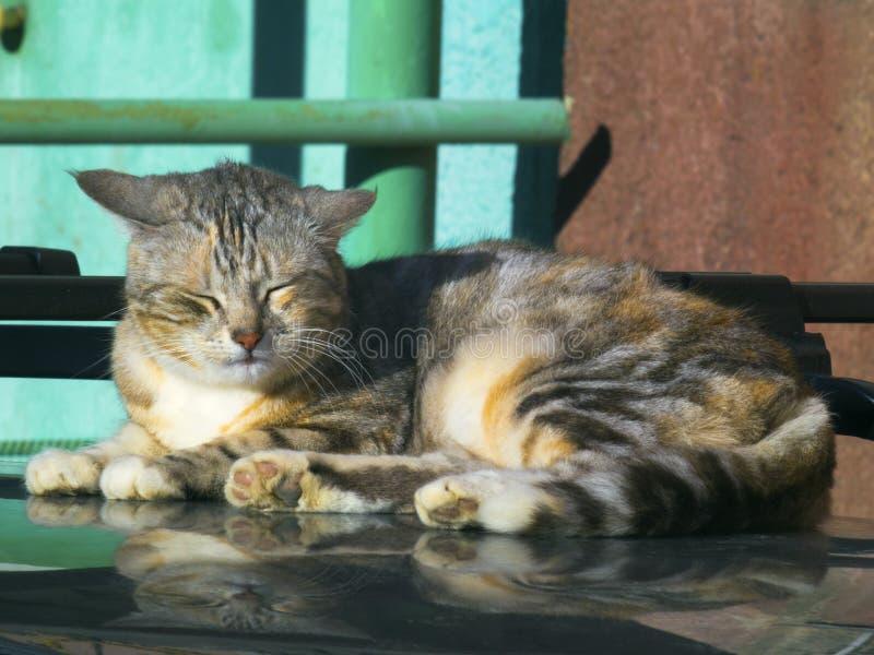 在汽车屋顶的可爱的猫睡眠  库存照片