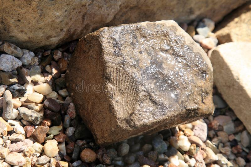 在沉积的化石壳版本记录 免版税库存图片