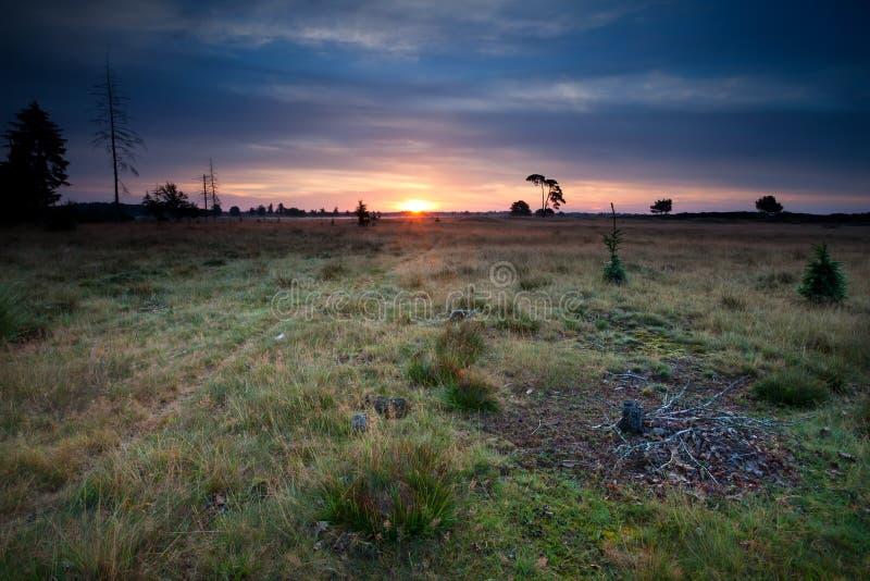 在沙丘和草甸的日出 免版税库存照片