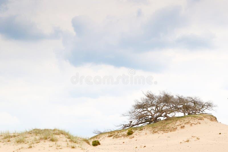 在沙丘外缘的多云天空 免版税图库摄影