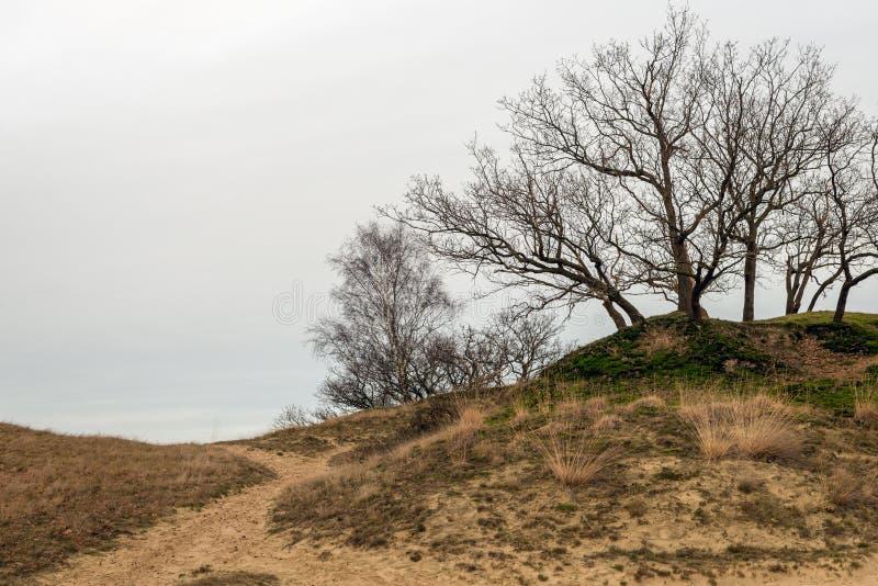 在沙丘的上面的光秃的树 免版税库存图片