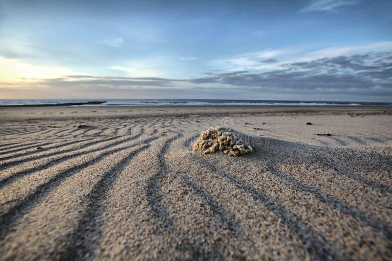 在沙丘的日落视图 库存照片