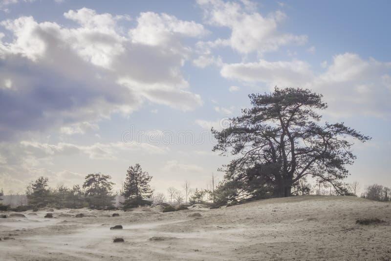 在沙丘的树在一蓝色好日子 免版税库存照片