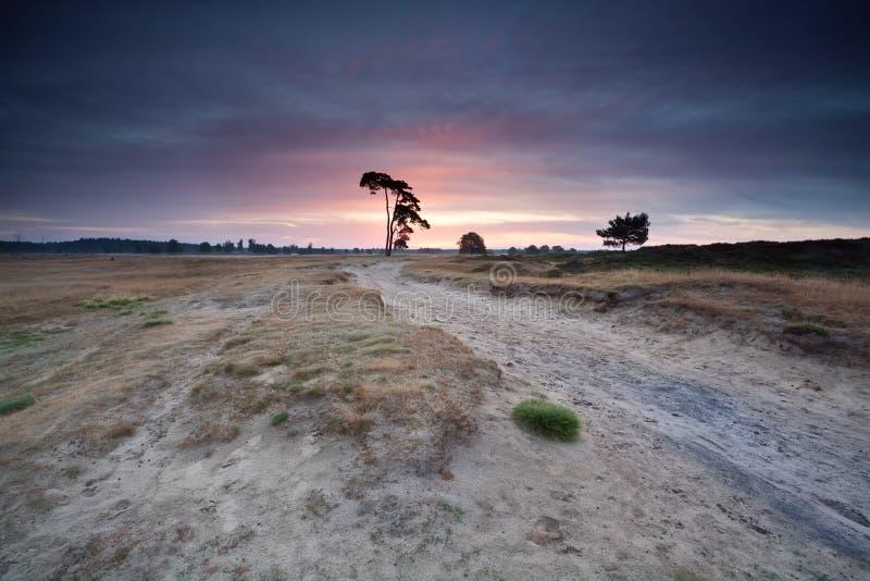 在沙丘的桃红色夏天日出 免版税库存照片