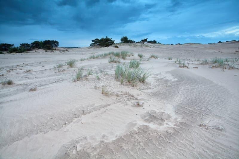 在沙丘的草在蓝天 免版税图库摄影