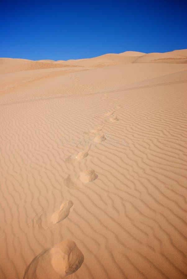 在沙丘间的脚步 图库摄影