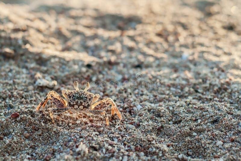 在沙子关闭的一个螃蟹 库存图片