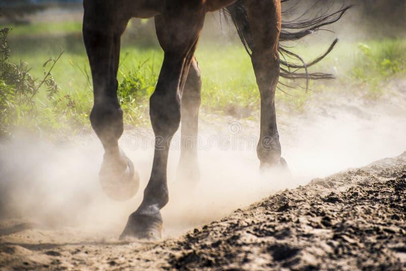 在沙子尘土的蹄 库存图片