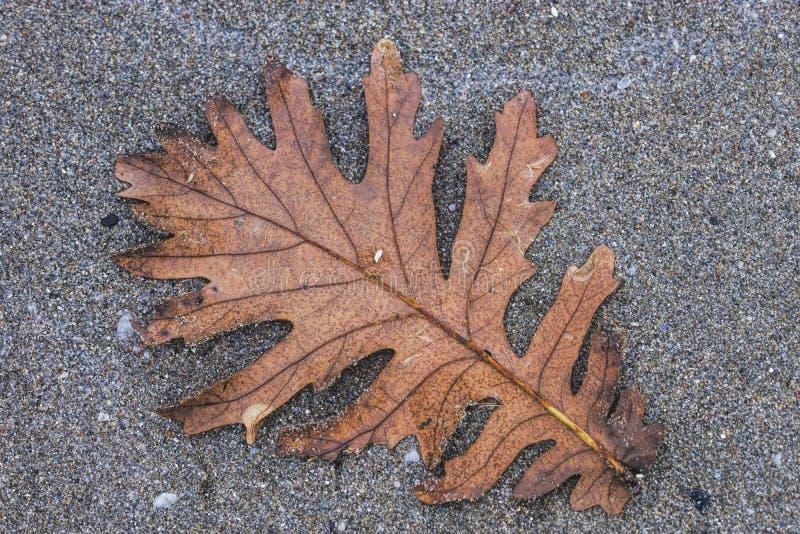 在沙子海滩的秋天叶子 免版税库存照片