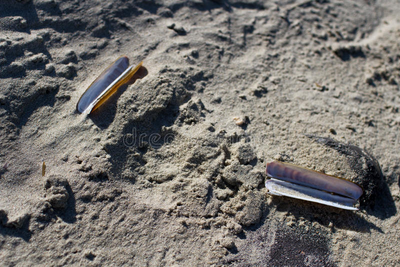 在沙子的两壳 免版税库存图片