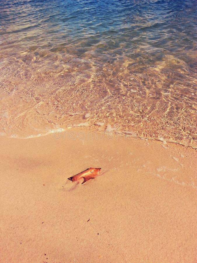 在沙子的叶子 库存图片