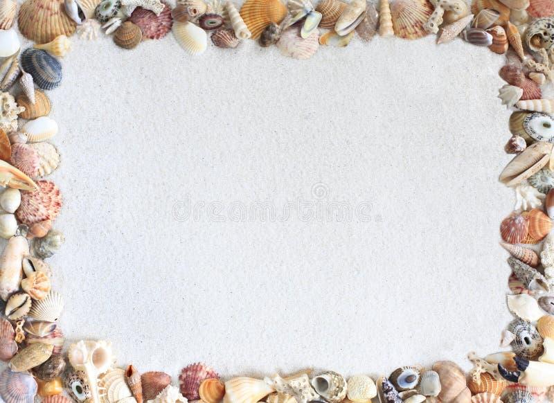 在沙子的壳框架 库存图片