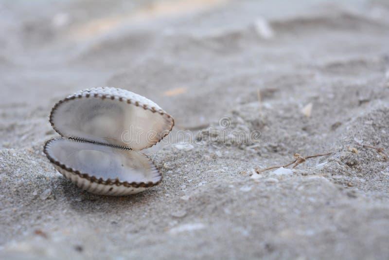在沙子的开放壳 库存照片