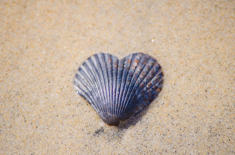 在沙子的心形的海壳 免版税库存图片