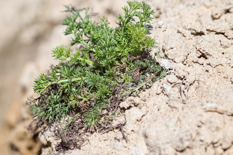 在沙子的新的绿草 免版税库存照片