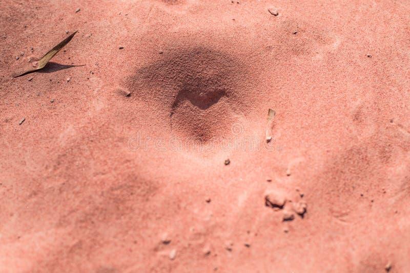 在沙子的昆虫陷井 库存照片