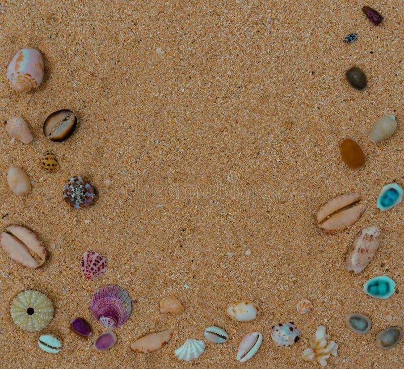 在沙子的明亮的贝壳框架 库存照片